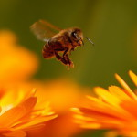 fly_flower_bee_insect_49791_3840x2400