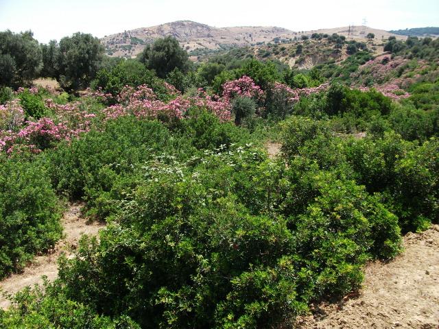 rosemary farm1