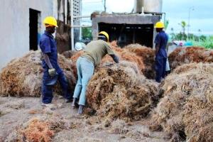 海地-岩蘭草農場